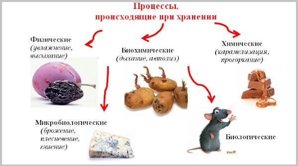 Процессы-происходящие-при-хранении-товаров