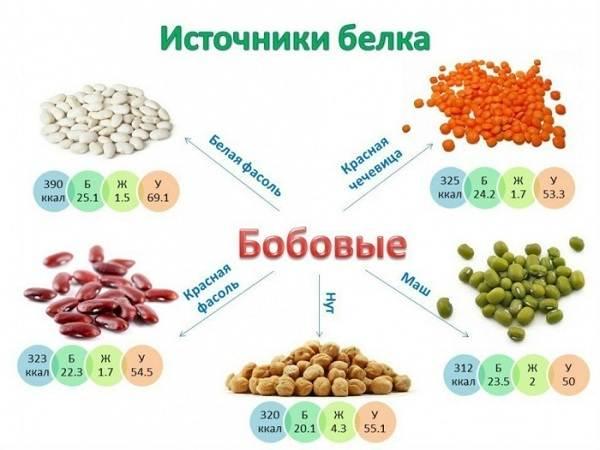 Химический-состав-продовольственных-товаров-Белки