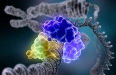 Ферменты — понятие классификация, свойства