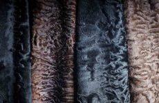 Каракуль: сырье, основные типы завитков, особенности деления по сортам
