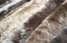 Овчина шубная: сырье, основные виды, особенности сортировки