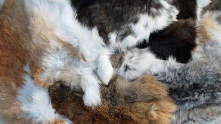 Товароведная характеристика мехового домашнего полуфабриката: кролик, собака
