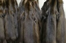 Товароведная характеристика пушного полуфабриката: песец, соболь, нутрия, колонок