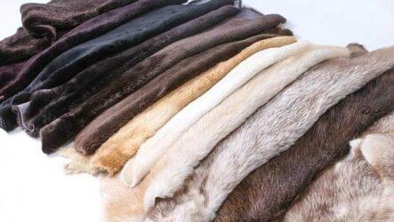 Факторы, влияющие на качество пушно-мехового сырья и готовых изделий