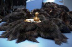 Пушно-меховое сырье: понятие, классификация, отличительные признаки