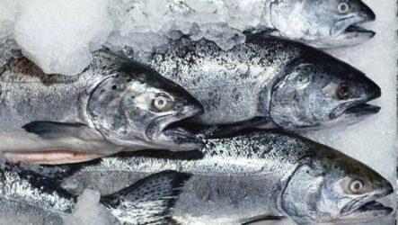 Плюсы и минусы покупки замороженной рыбы у производителя