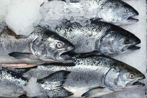 Плюсы-и-минусы-покупки-замороженной-рыбы-у-производителя-1