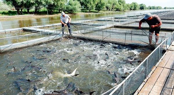 Плюсы-и-минусы-покупки-замороженной-рыбы-у-производителя-3